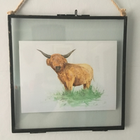 Hanging Glass Frame 8x8 - Scottish highland Coo, Cow Print