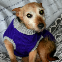 Purple and Grey Terrier Dog Coat
