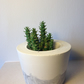 White concrete planter with marble effect