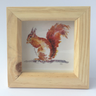 Red Squirrel in Box Frame