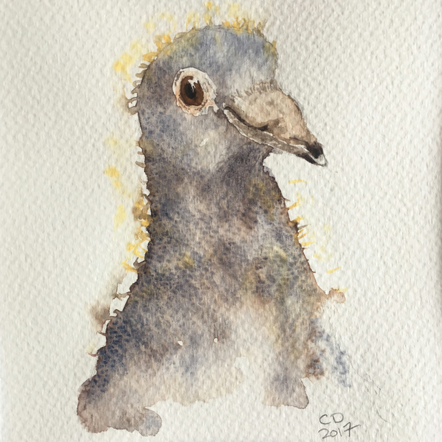 "Pigeon ""Squeaker"" Squab Watercolour Artwork"