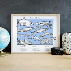 Sharks of Britain British Atlantic Shark Illustration Art Print