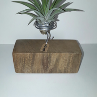 Reclaimed Lacewood Air Plant Holder (including air plant).