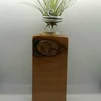 Cherry Wood Air Plant Holder (Plant Included)