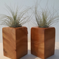 A Pair Of Reclaimed Cedar Of Lebanon Air Plant Display (includes air plants)