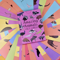 Amazing Animals Fact Cards Set Two - Flash Cards - Animal Gift - Stocking filler