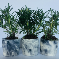 Round Marbled White and Black Concrete Planters for Succulents