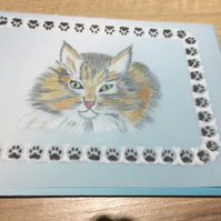 Pretty Kitty Cat, a sweet kitten card for an animal lover