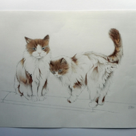 ORIGINAL coloured pencil cat pair portrait 'kitty cuddles'