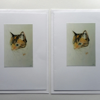 PERSONALISABLE CARDS pack of two portrait of tortoiseshell cat