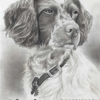 "Custom Pet Portrait 5x7"" hand drawn from your photos"