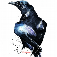 Common Raven - Watercolour Print A3 (30x40cm)