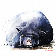 Pot Bellied Pig - Watercolour Print A3 (30x40cm)
