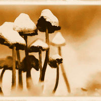 Mushrooms, Fungi Art Card, Sepia, Unusual, Birthday, Father's Day, Mother's Day