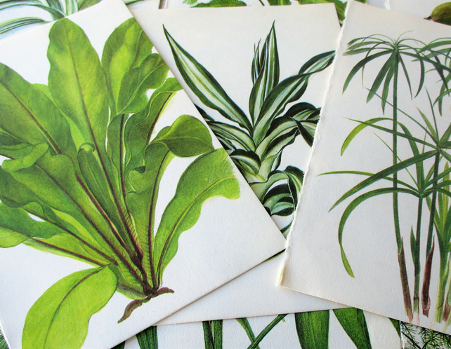Craft Paper, Book Plates, Ferns, and Foliage, Decoupage Paper.