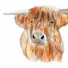 Art Print, Highland cattle, cow, original art, watercolour painting
