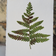 Botanical fern 2