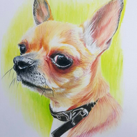 Pet Portraits A4