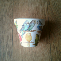Hand Painted and Decoupaged Flower Pots Budgies and Canaries, budgie gifts.