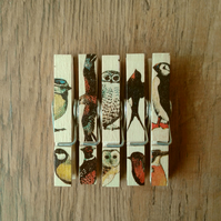 Hand made Decoupaged clothes peg fridge memo magnets set of 5, British  Birds.