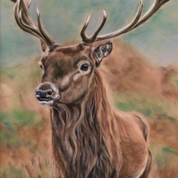 Small Stag Print, Original British Wildlife Picture, Animal Wall art, Stag Art
