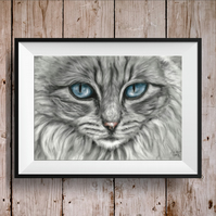 Grey Cat Picture - Cat Print - Long haired Cat - Cat Gift Idea - Blue eyed cat