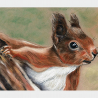 Red Squirrel Print, woodland animal wall art from painting by Tracey Earl