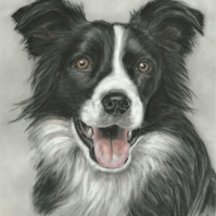 Border Collie art, Border Collie picture, original art print, dog lover gift