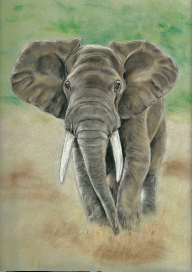 Elephant art, elephant picture, animal wall art, elephant gift, animal art