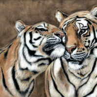 Tiger and tigress picture, original art print, tiger painting, tiger gift