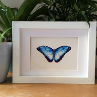 Blue Morpho Butterfly Original Ink Drawing