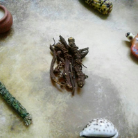 Osha Root - medicine snake incense curio medicine native tea protection blessing