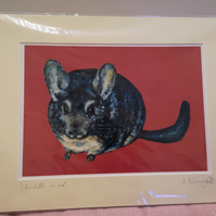 Chinchilla on red A4 Print