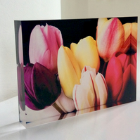 Tulip photograph in Acrylic Block