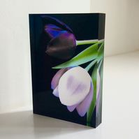 Blue Tulips photograph in acrylic block