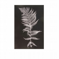 Single black and white botanical fern postcard by Stef Mitchell