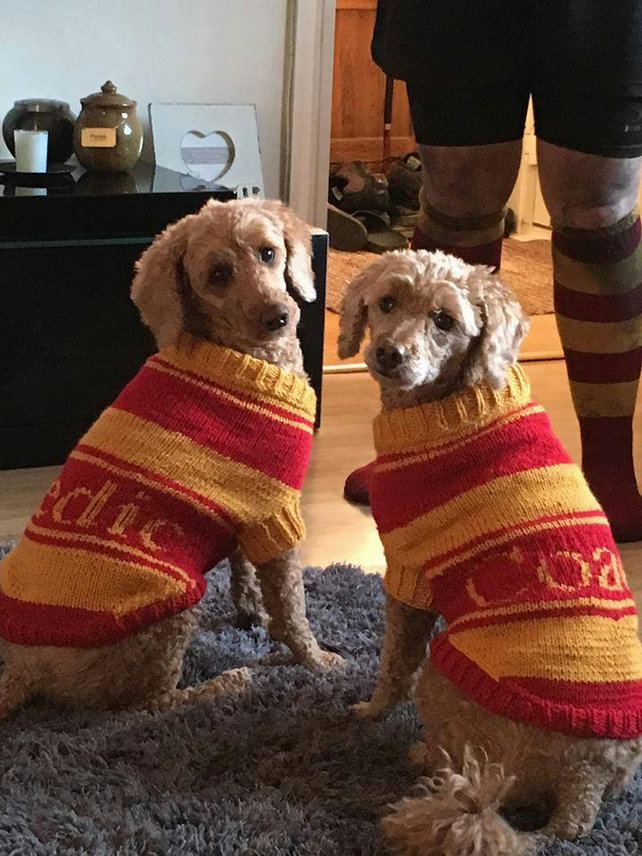 DOG-COATS: Hand-knitted with TEXT to order
