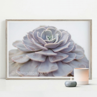 Succulent print, Botanical art print, Flower poster, Home decor, Mum gifts