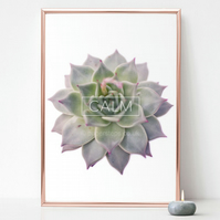 Calm print, Succulent poster, Floral wall art, Plant photography, Botanical art