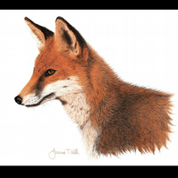 RED FOX - Wildlife Greetings Card - Blank Inside