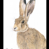 BROWN HARE  'CLOSE UP' - Wildlife Greetings Card - Blank Inside
