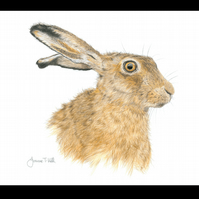 BROWN HARE - Wildlife Greetings Card - Blank Inside