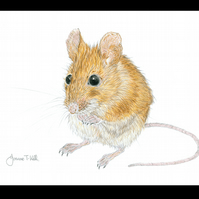 WOOD MOUSE - Wildlife Greetings Card - Blank Inside