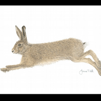 BROWN HARE  'RUNNING' - Wildlife Greetings Card - Blank Inside