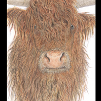HIGHLAND COW  'CLOSE UP' - Wildlife Greetings Card - Blank Inside