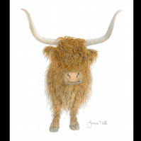 HIGHLAND COW  - Wildlife Greetings Card - Blank Inside