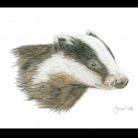 BADGER - Wildlife Greetings Card - Blank Inside