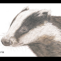 BADGER 'Close Up'  - Wildlife Greetings Card - Blank Inside