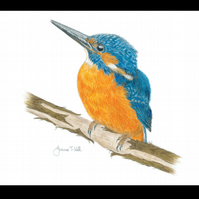 KINGFISHER - Wildlife Bird Greetings Card - Blank Inside