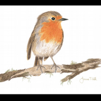 ROBIN - Wildlife Bird Greetings Card - Blank Inside